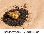 Freshly Dug Potato In The Form...