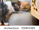 thirsty cats drink water... | Shutterstock . vector #700892485
