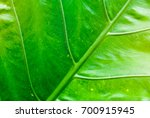 green leaf texture for... | Shutterstock . vector #700915945
