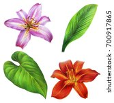 Pink Lilies And Leaves Drawing...
