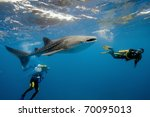 Whale Shark And Underwater...