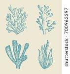 alga vector sketch set.... | Shutterstock .eps vector #700962397