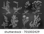 set of hand drawn medicinal... | Shutterstock .eps vector #701002429