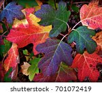 Colorful Fall Leaves Of Red ...