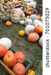 pumpkins | Shutterstock . vector #701075029