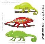 lizard veiled chameleon set... | Shutterstock .eps vector #701163511
