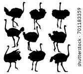 Set Of Ostrich Full Length...