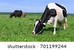 cows on a summer pasture | Shutterstock . vector #701199244