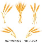 ripe yellow wheat ears ... | Shutterstock .eps vector #70121092