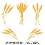 ripe yellow wheat ears ... | Shutterstock .eps vector #70121092