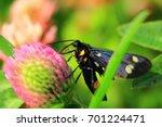 Black Butterfly The Butterfly...