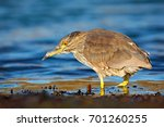 sea bird. heron sitting on the... | Shutterstock . vector #701260255