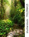 rainforest   bwindi... | Shutterstock . vector #701298415