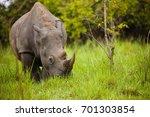 rhino   ziwa rhino sanctuary  ... | Shutterstock . vector #701303854