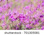 amazing floral background of... | Shutterstock . vector #701305081