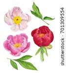 watercolor illustration of... | Shutterstock . vector #701309554