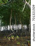 Small photo of Mangroves at the coastal intertidal zone, Malacca, Malaysia.