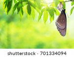 amazing moment about butterfly... | Shutterstock . vector #701334094