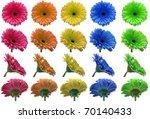 Large Set Of Colorful Gerbera...