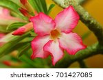 beautiful flower | Shutterstock . vector #701427085