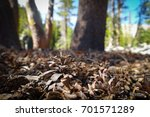 a baby pinecone among the... | Shutterstock . vector #701571289