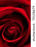 beautiful red rose close up. | Shutterstock . vector #70158679