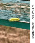 Small photo of American dagger moth caterpillar on chippy paint table, Atlanta, Georgia