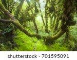 rainforest in northern of my...   Shutterstock . vector #701595091