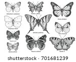 Butterfly Collection ...