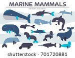 sea mammals animal collection... | Shutterstock .eps vector #701720881