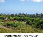 horseback riding with a view of ... | Shutterstock . vector #701742034