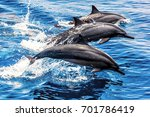 wild dolphins in the pacific... | Shutterstock . vector #701786419