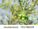 some green olives hanging on a... | Shutterstock . vector #701788249