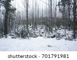 snow on trees and road in... | Shutterstock . vector #701791981