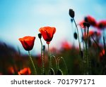 beautiful field of red poppies... | Shutterstock . vector #701797171
