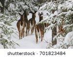 Group Of Deers Standing In The...