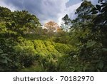 coffee plantation in naranjo...   Shutterstock . vector #70182970