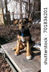 Small photo of Super cute Airedale puppy sits on a bench with a dry winter background