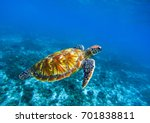 Sea Turtle In Deep Blue...