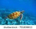 sea turtle in deep blue... | Shutterstock . vector #701838811