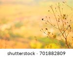 summer flower on the peak in... | Shutterstock . vector #701882809