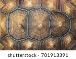 Stock photo large tortoise shell 701913391