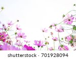 cosmos flower field on pink... | Shutterstock . vector #701928094