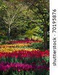 Colorful Tulips  Hyacinths And...