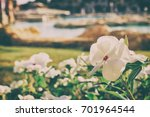 beautiful garden | Shutterstock . vector #701964544