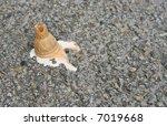 Ice Cream Fallen On The Street