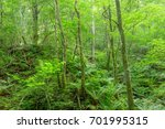 scenery from the deep forest of ...   Shutterstock . vector #701995315