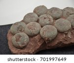 a large amount of dinosaur egg... | Shutterstock . vector #701997649