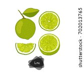 hand drawn sketch style lime... | Shutterstock .eps vector #702013765
