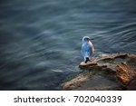 seagull isolated  sea background | Shutterstock . vector #702040339